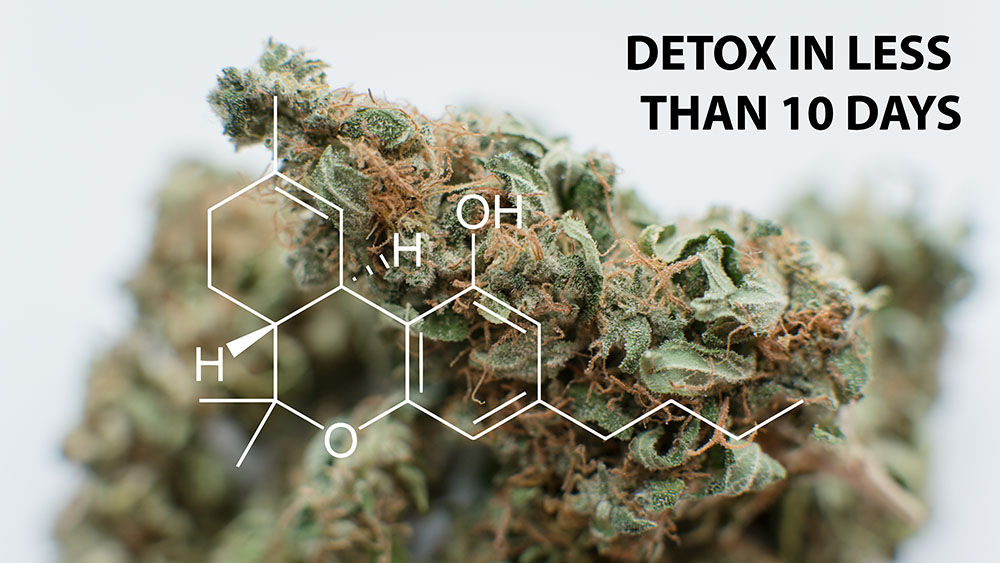 list of best thc detox kits that clean the thc out of your system