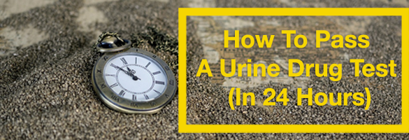 How To Pass A Urine Drug Test For Weed In 24 Hours